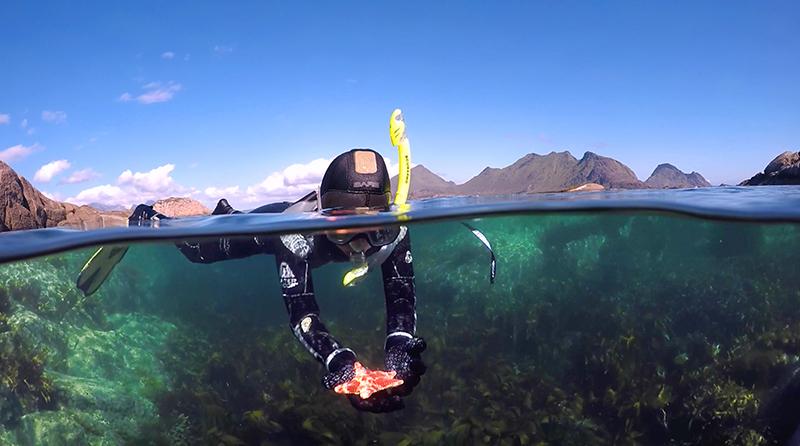 split photo snorkeling