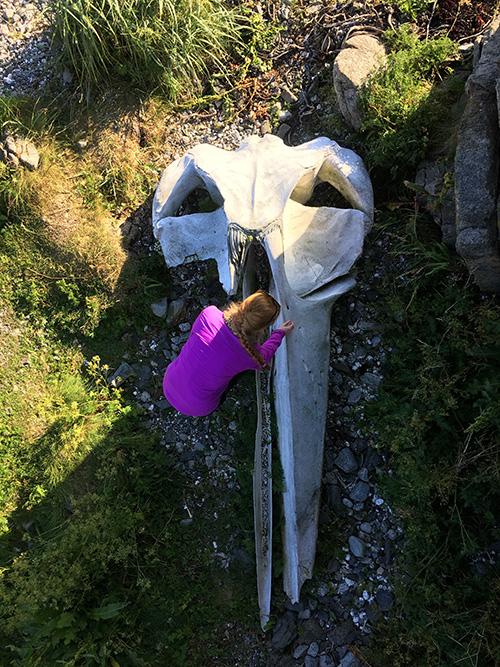 whale skull lofoten